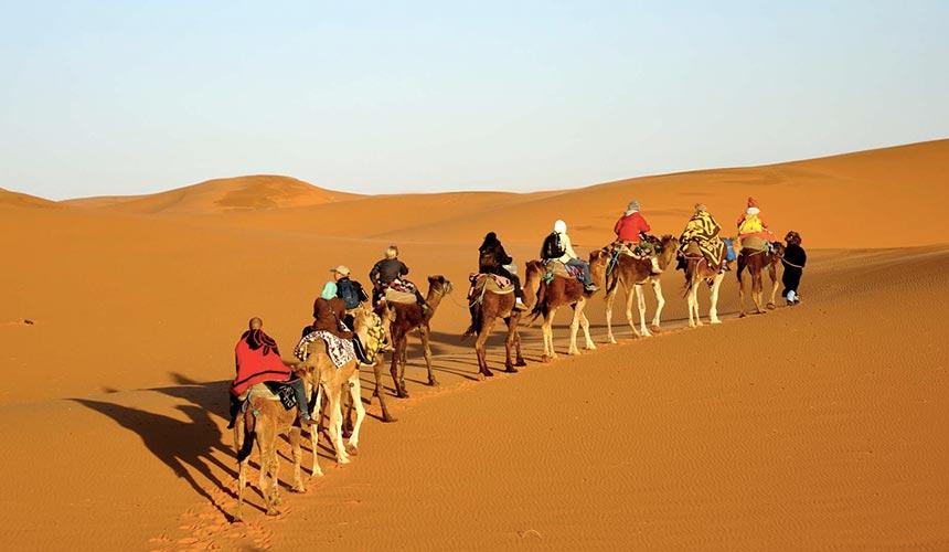 camels in Mesr desert