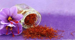 Saffron the red gold of Iran